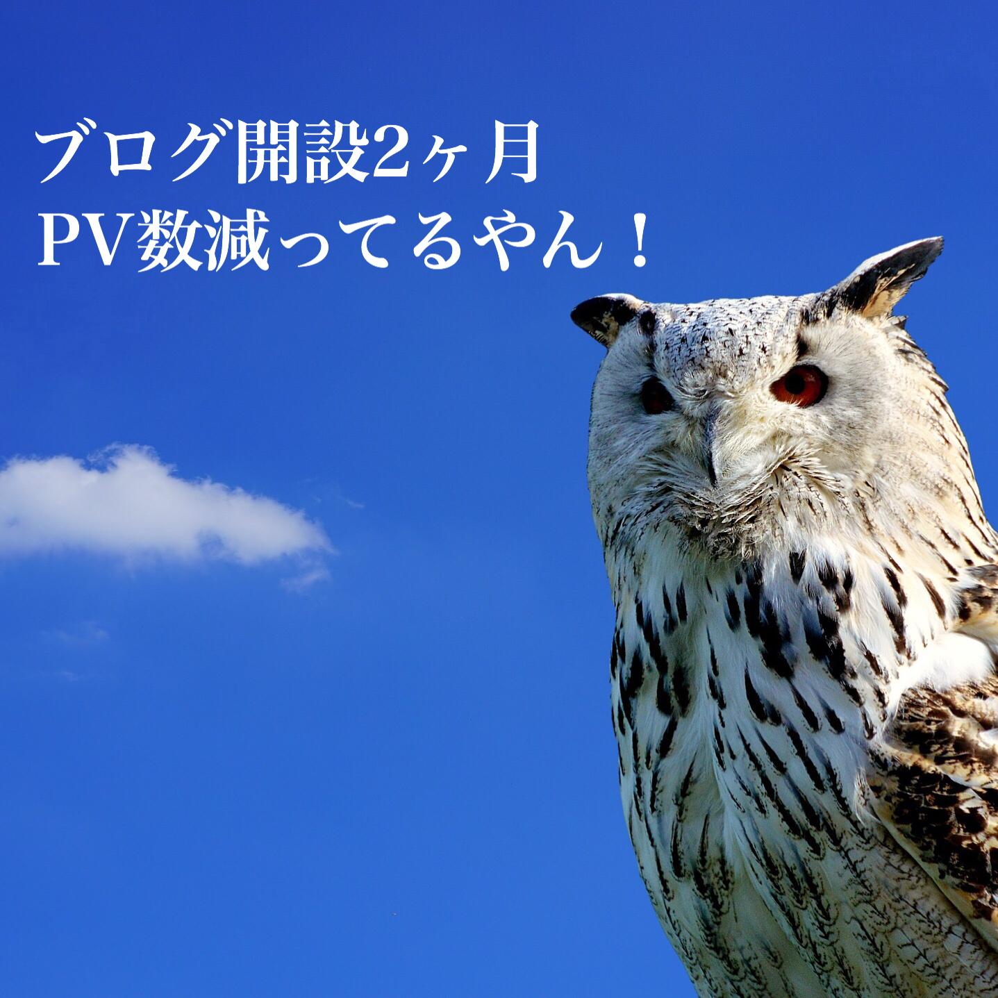 ブログ開設2ヶ月過ぎPV数が増えない
